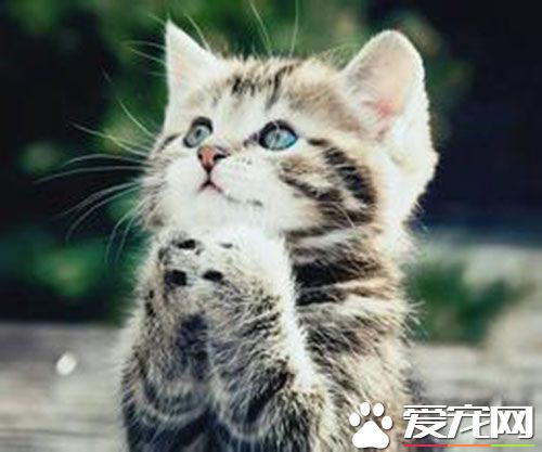 a_母猫不发情怎么办 母猫多大就会发情[新闻]